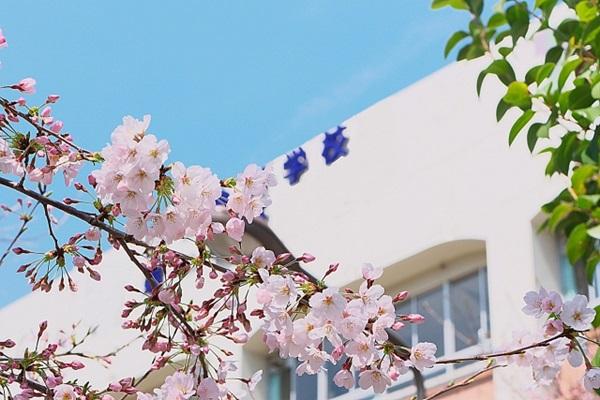 高校の校舎と桜