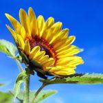 起立性調節障害は暑さに注意!梅雨~夏の季節に再発・悪化傾向